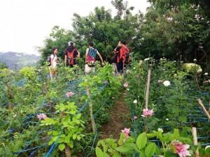 Babag Trails