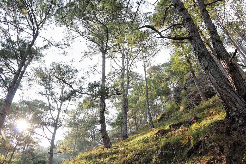 Fato Trail