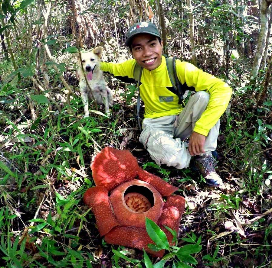 Rafflesia in Mt. Napulak, Philippines
